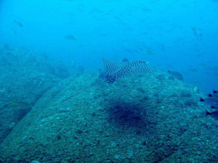 Mexico puerto escondido deep blue dive school padi - Dive deep blue ...